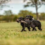 puppies-4 01 26
