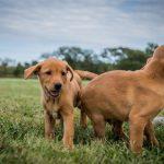 puppies-7666-2