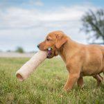 puppies-7703
