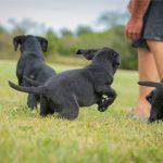puppies-7754