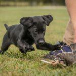 puppies-7826-2